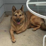 greystonedog